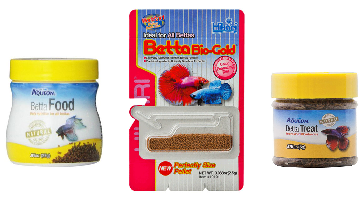 betta fish food and feeding