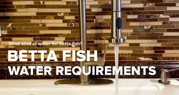 Betta Fish Water