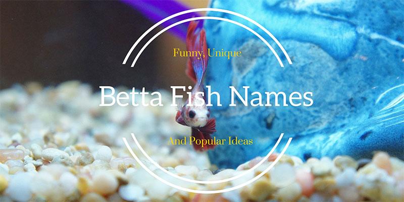 439 amazing betta fish names male female for Creative fish names