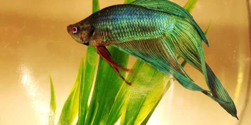 beautiful fish tanks