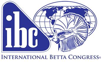 Betta Fish Fin Rot: Symptoms, Causes, Treatment   Bettafish org