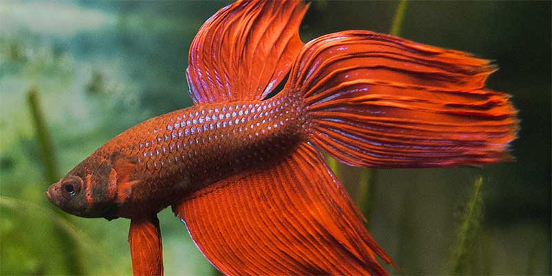 439 amazing betta fish names male female