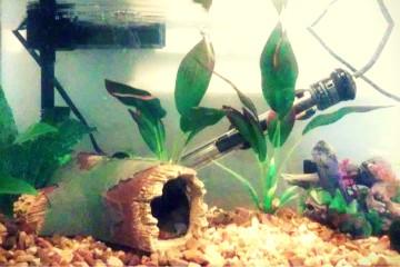 Jasper's Tank