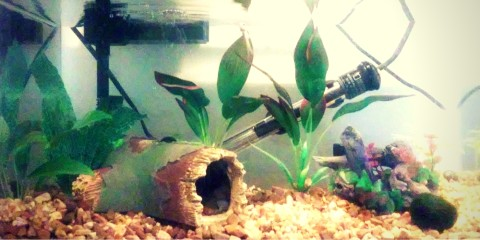 439 amazing betta fish names male female for Lifespan of a betta fish in captivity