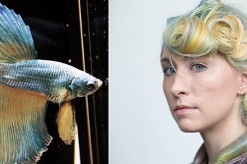 Betta Fish Hair Inspiration