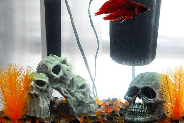 Halloween Theme Betta Fish Tank