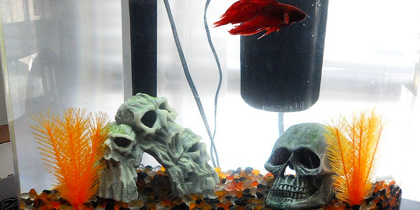 Halloween themed betta tank inspiration for Betta fish tank ideas