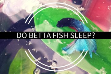 What kind of water for betta fish for Best place to buy betta fish