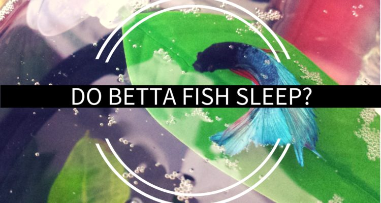 the betta blog archives