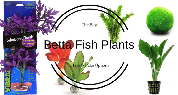 Betta Fish Plants