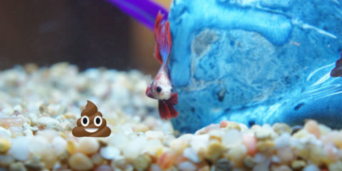 439 amazing betta fish names male female for What type of water do betta fish need