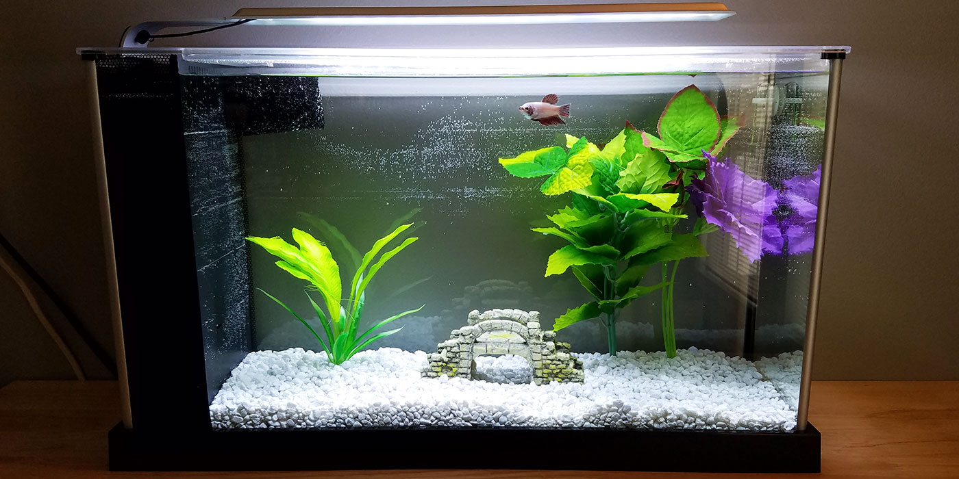 Do betta fish need a filter for How to keep fish tank clean without changing water