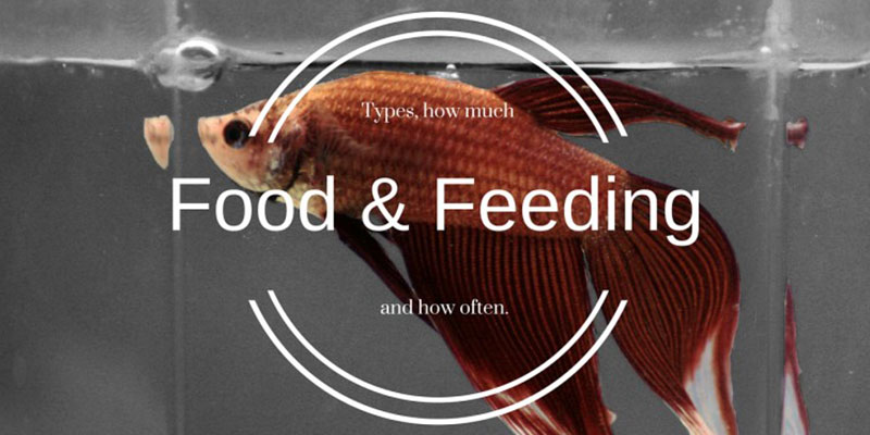 The ultimate betta fish food and feeding guide for Fish feeding chart