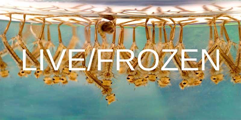 Live & Frozen Betta Food